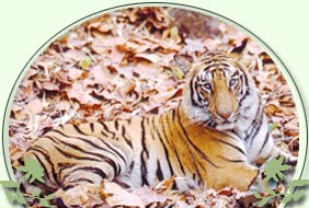 Pench Tiger, India Tour