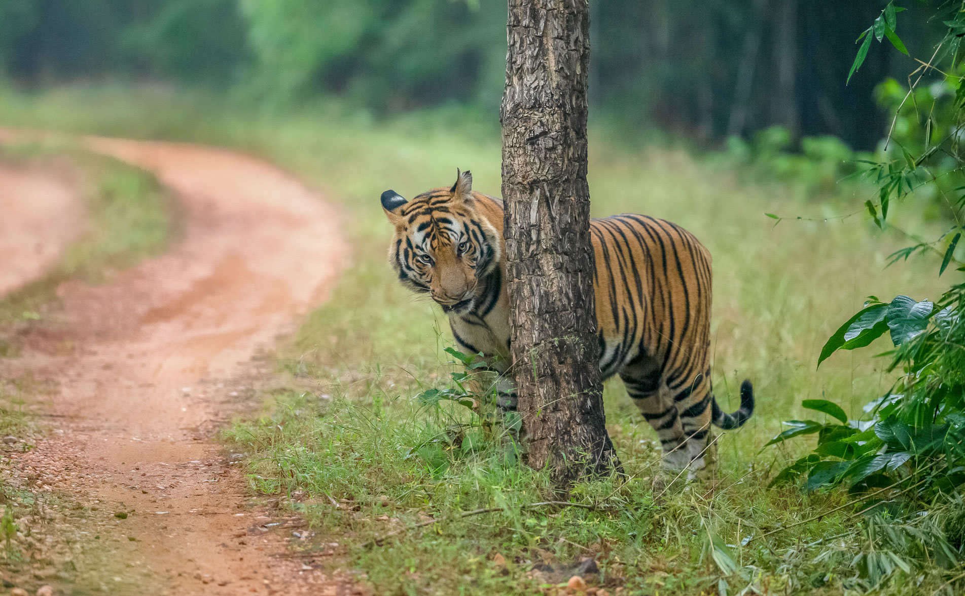 Pench Wildlife Tour Package